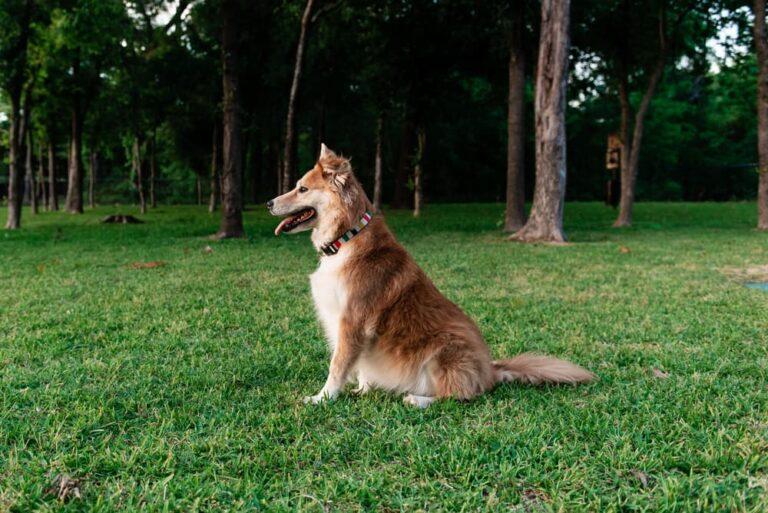 Dog in dallas dog park