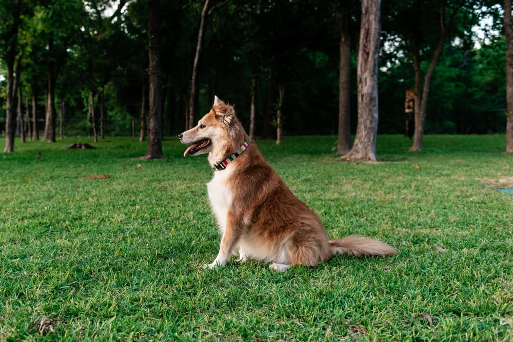 What is the Best Dog Park in Dallas?