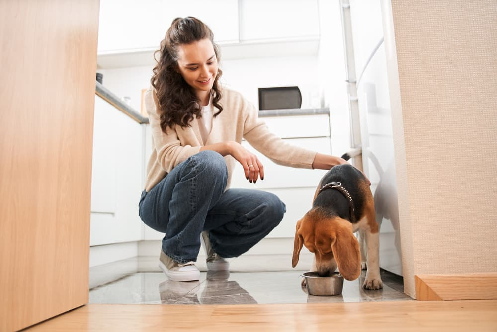 Vitamins and Minerals Required in Dog Nutrition