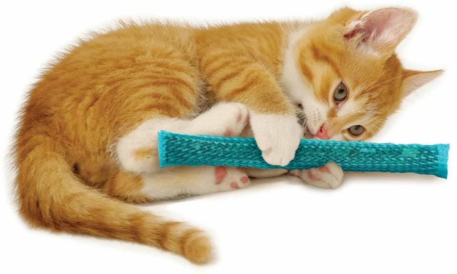 Cat playing with durable chew toy