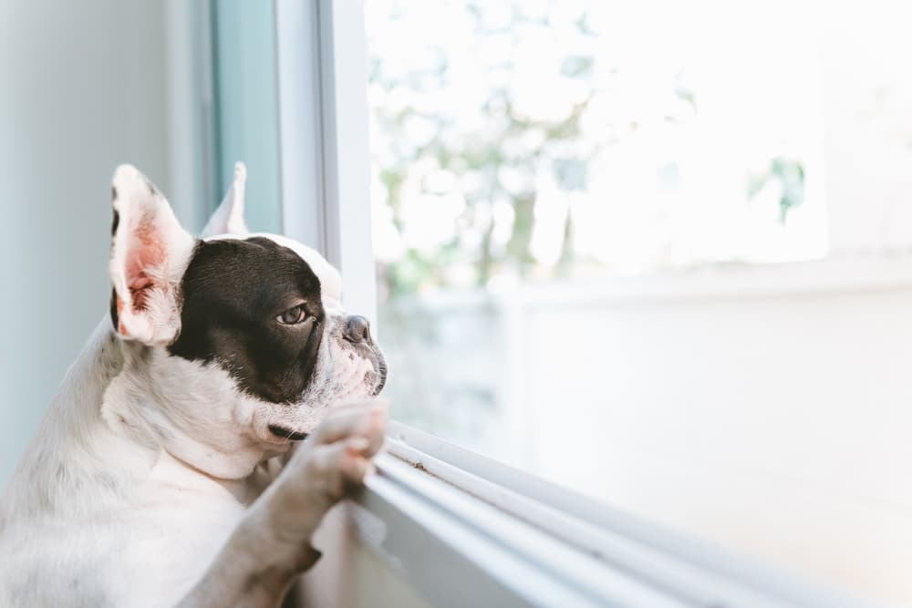 12 Ways to Help Pets Adjust to Being Home Alone