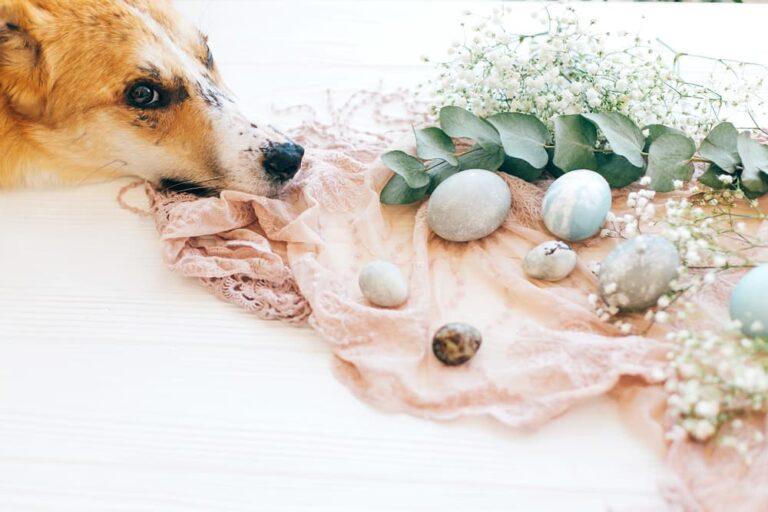 Dog with eucalyptus leaves