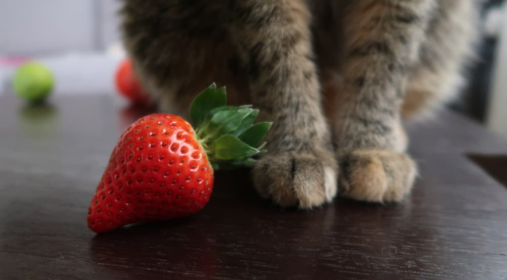 Strawberry next to cat's paws
