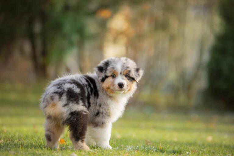 small puppy looking back at camera