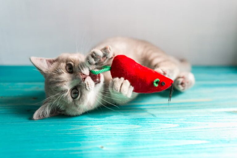 Cat playing with chew toy