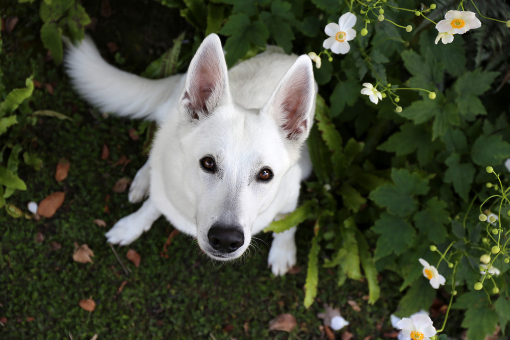 Unique white dog with flowers
