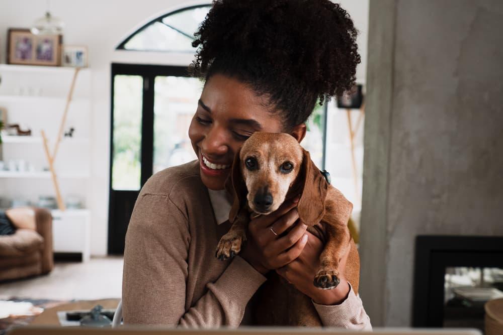 Pet Wellness Plans: 6 Top Ones to Consider