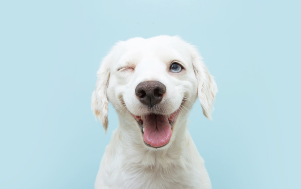 80 White Dog Names for Snow-Colored Pups