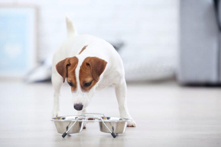 dog with food bowl