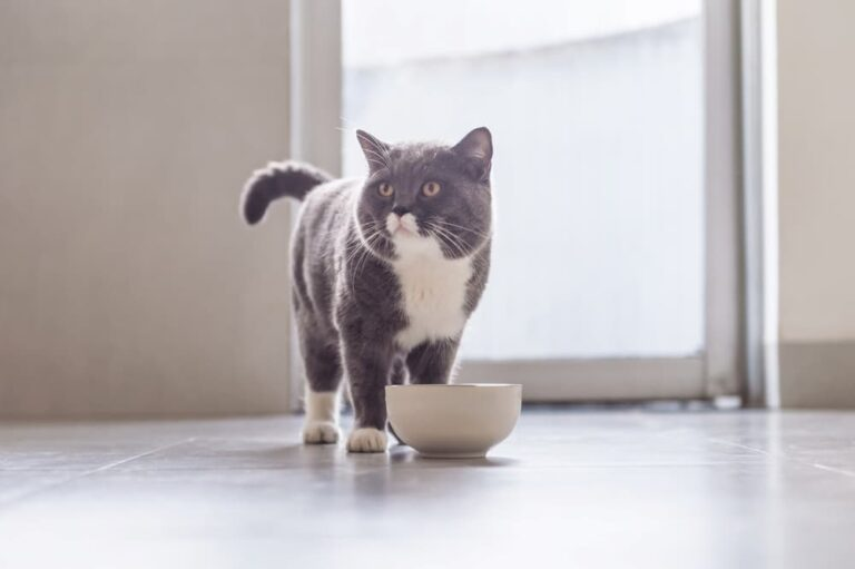 cat with food bowl