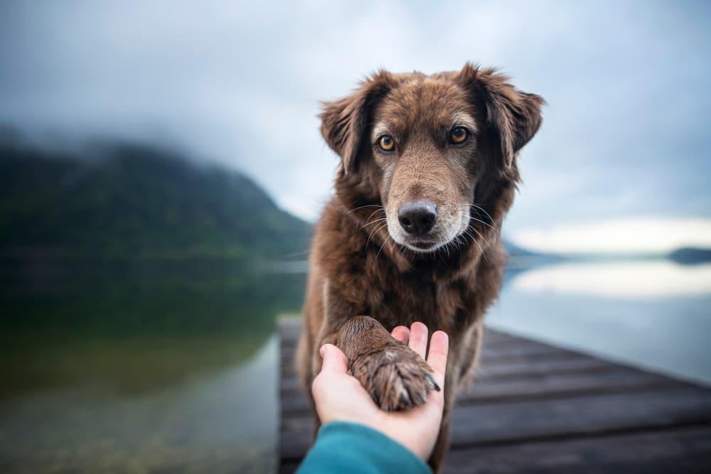 Dog Paw Hyperkeratosis