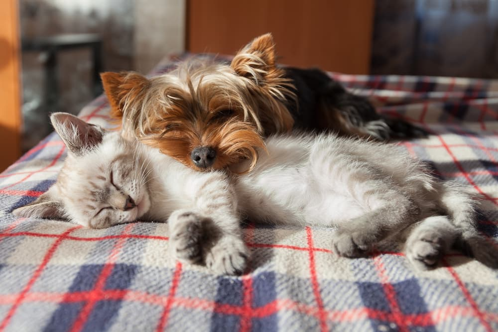 Cat and dog sleeping together on a blanket