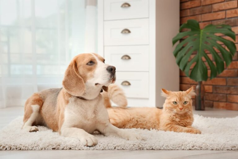 Dog and cat laying on rug looking a little sad