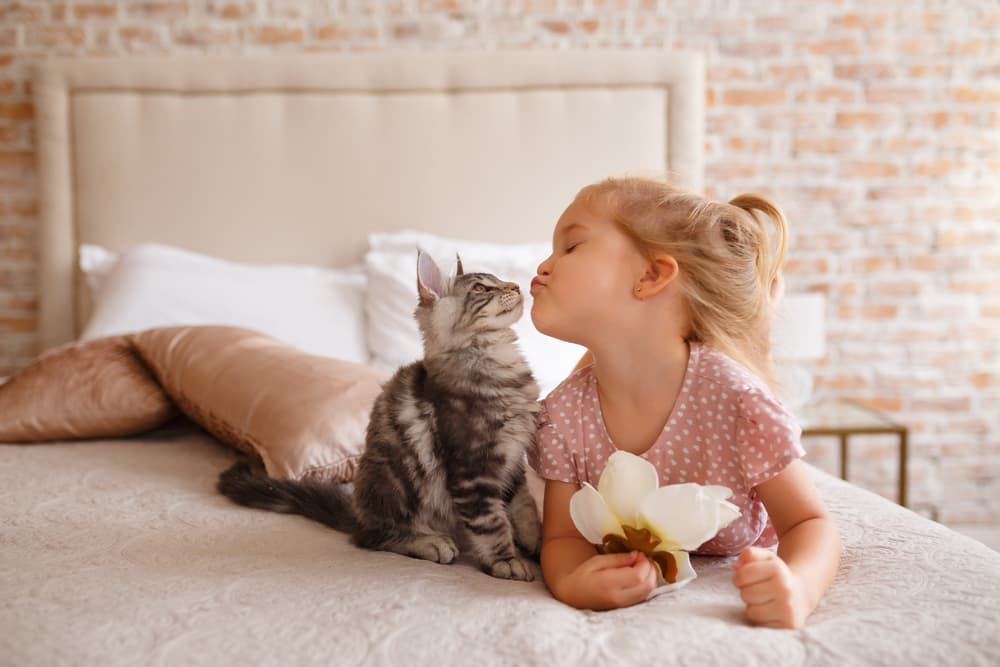 Cat with little girl giving her a kissy face laying on the bed together