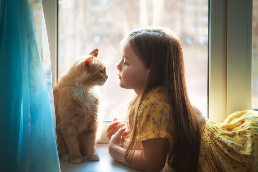 Cat and child sitting on a windowsill playing