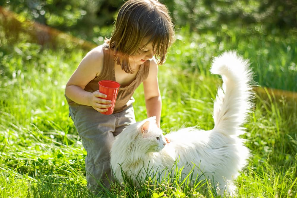 Child petting a cat in the garden