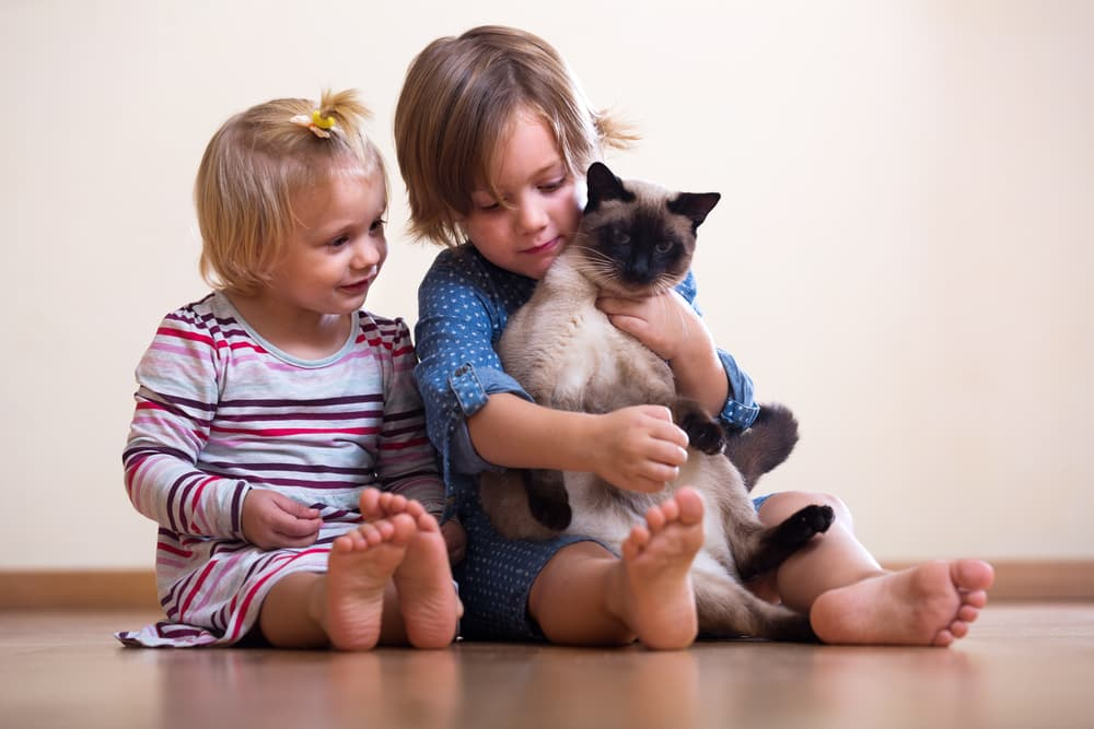 Two kids sitting on the ground with their ragdoll cat