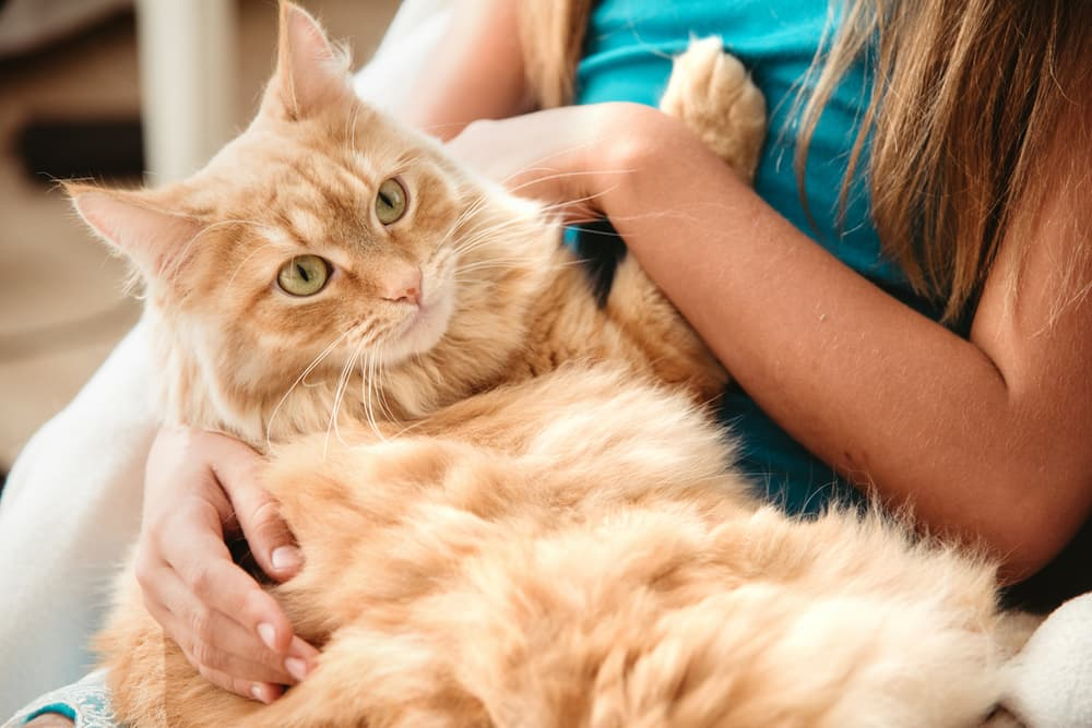 Kids and Cats: 10 Tips to Promote Bonding