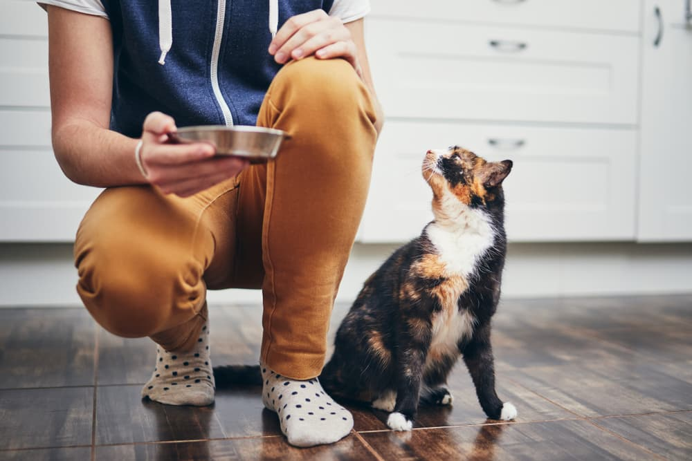 Owner holding cat food bowl with cat looking up next to them