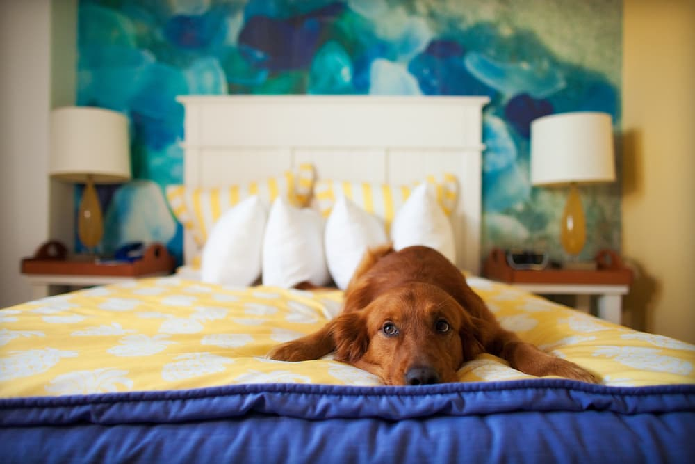 Dog laying on a bed showing signs of loneliness