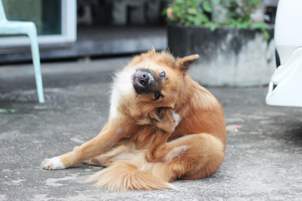 Itch Relief for Dogs: Your Complete Guide