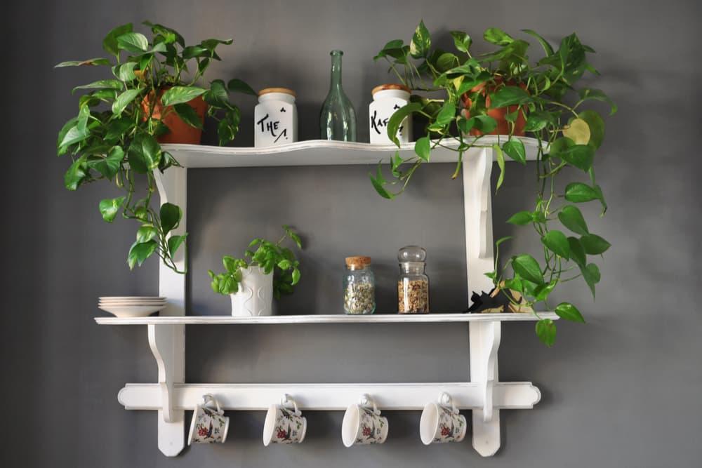 House plants sitting high up on a kitchen shelf