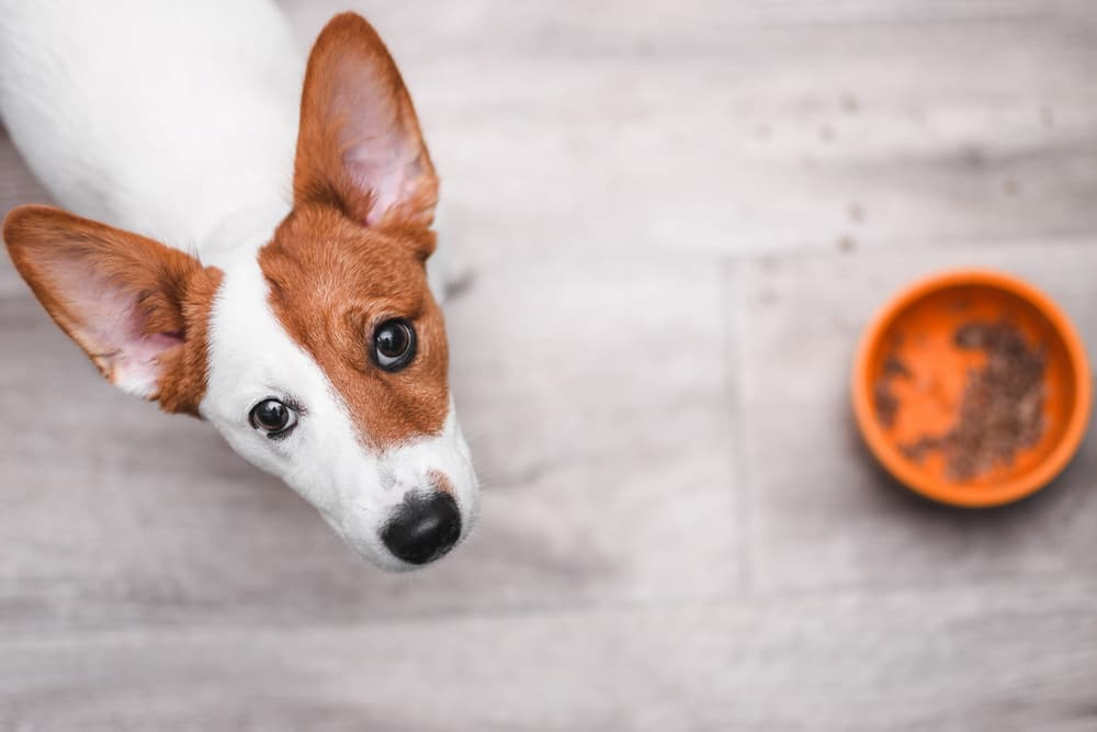 9 Best Sensitive Stomach Dog Foods to Try