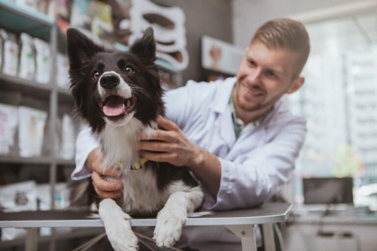 Veterinarian prescribing dog medication
