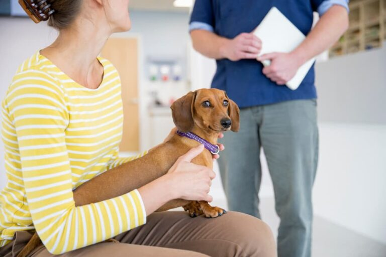 Woman with dachshund at veterinarian