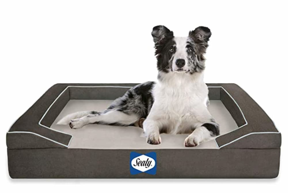 Dog laying in Sealy cooling gel dog bed