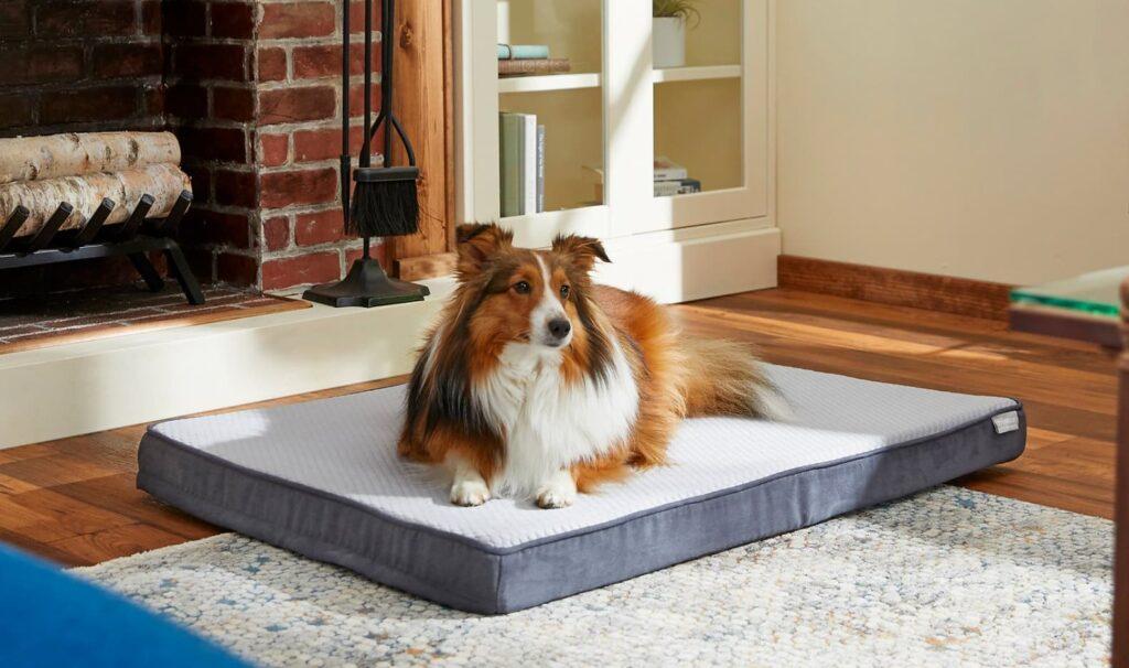 Dog laying on orthopedic dog bed