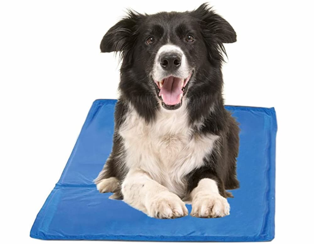 Dog laying on cooling pad
