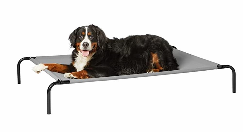 Dog laying in elevated dog bed