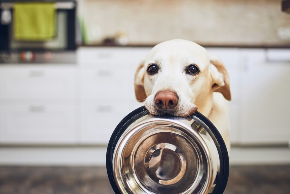 Dog holding empty food bowl in mouth