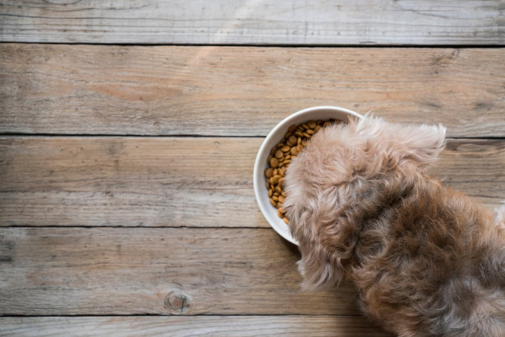 8 Dog Food Toppers to Mix Up Mealtime