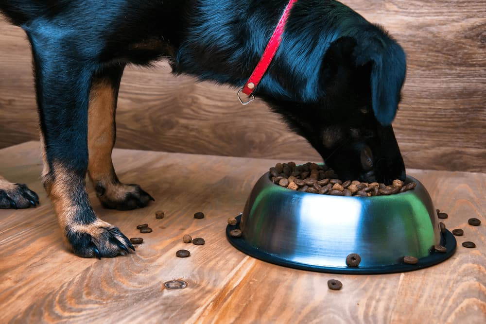 Puppy eating food from a bowl