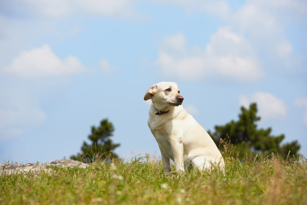 Dog looking scared and lonely in a field