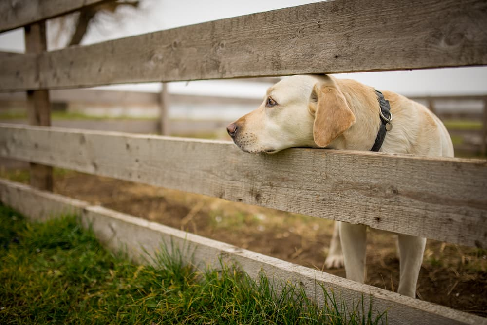 Dog head poking out of a fence