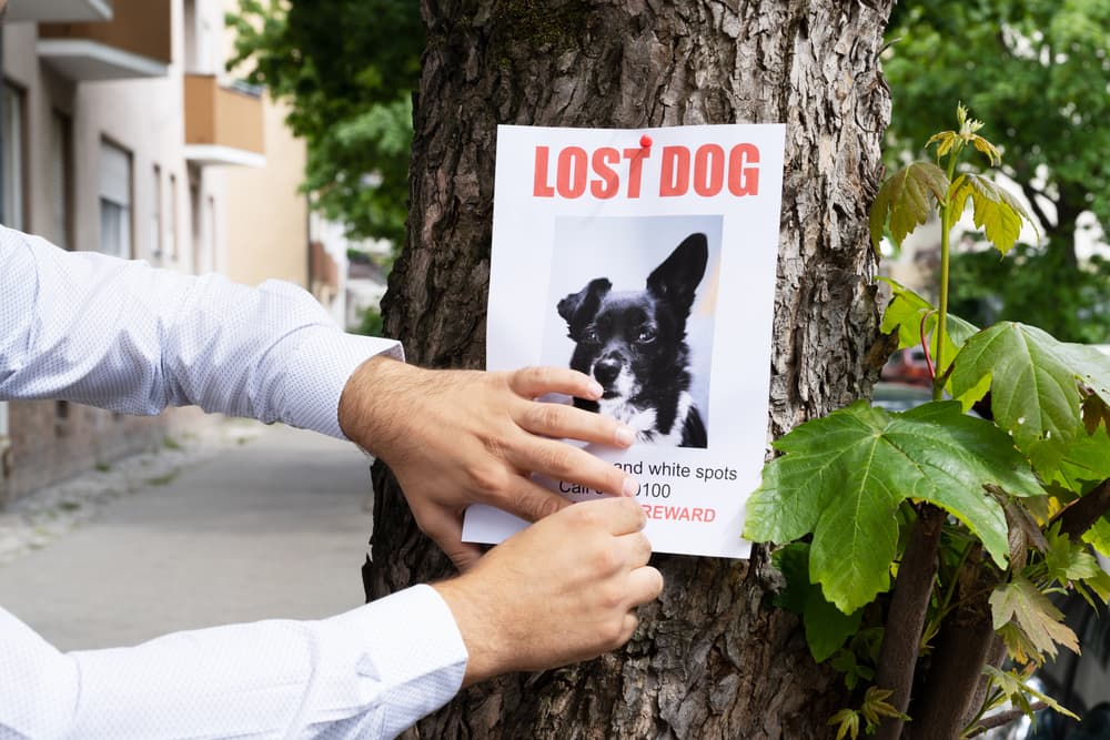 Lost dog poster being hung up in a neighborhood