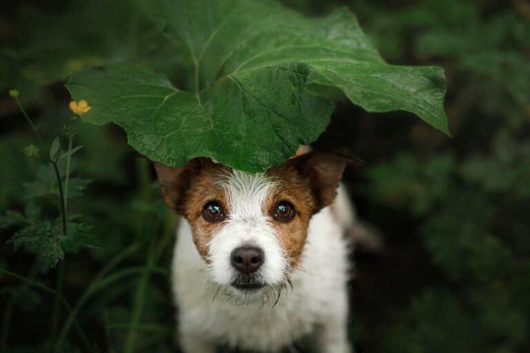 Lost dog hiding in a bush