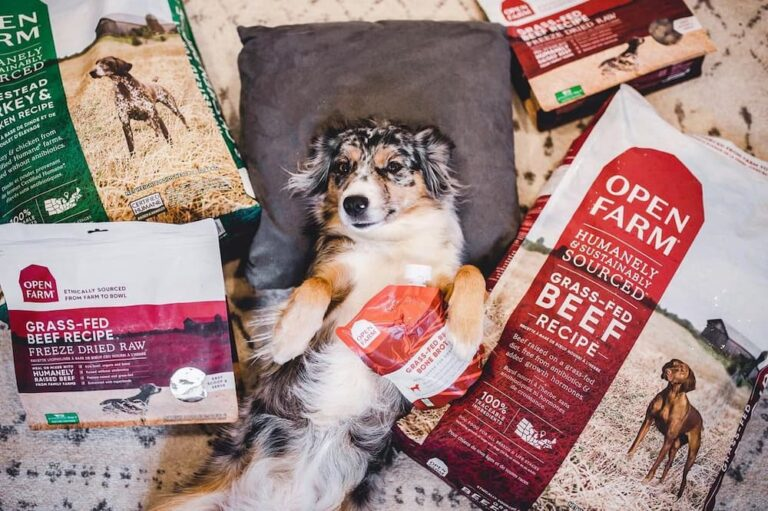 dog surrounded by Open Farm products