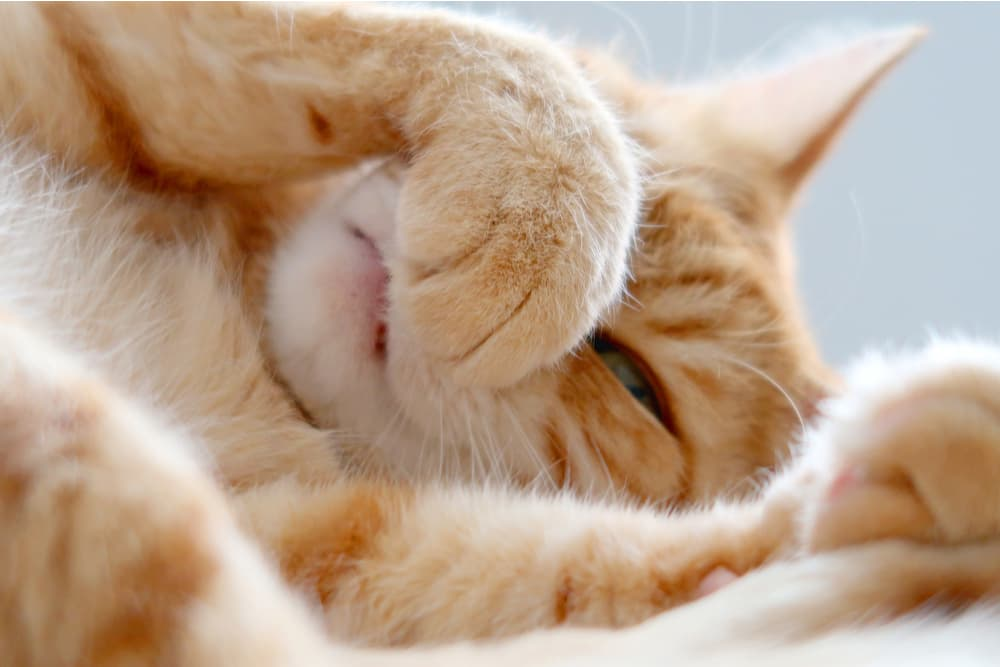 What Smells Do Cats Hate?