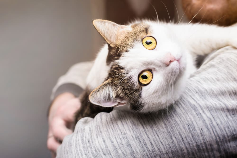 Cat being held in owner's arms and is happy