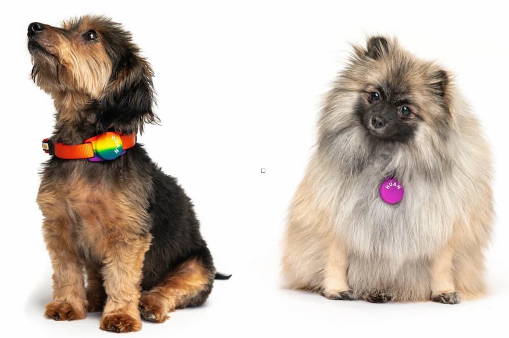 Two dogs sitting wearing Huan dog smart pet tags