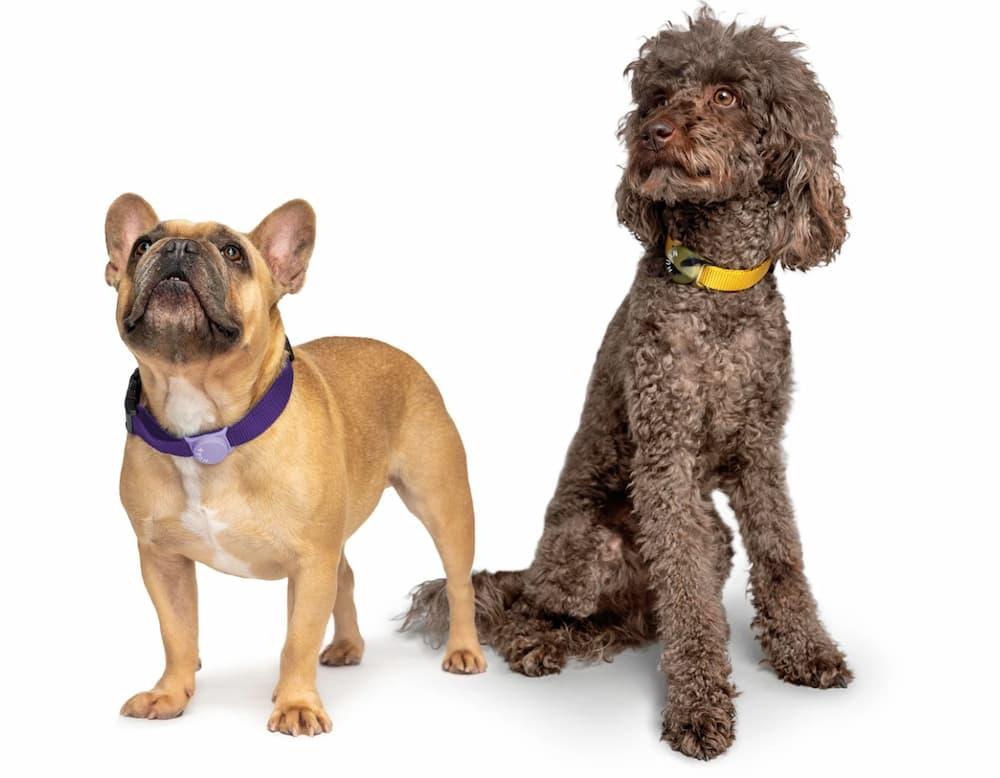 Dogs wearing Huan smart pet trackers