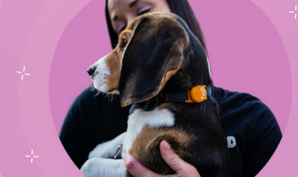 Huan Dog Tracker Review: A Smart Way to Keep Tabs on Your Pet
