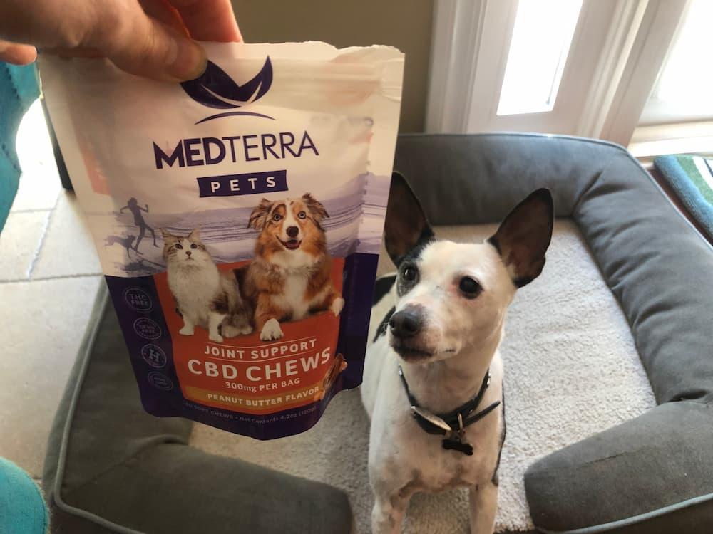 Medterra pets test number three terrier
