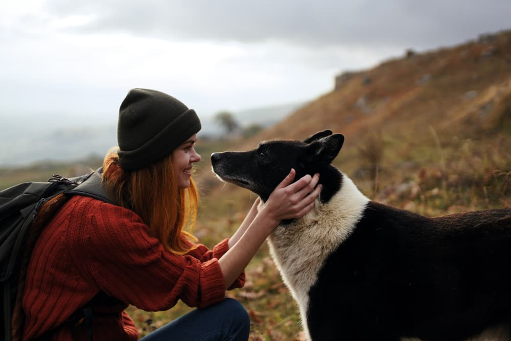 Dog being pet by owner outdoors