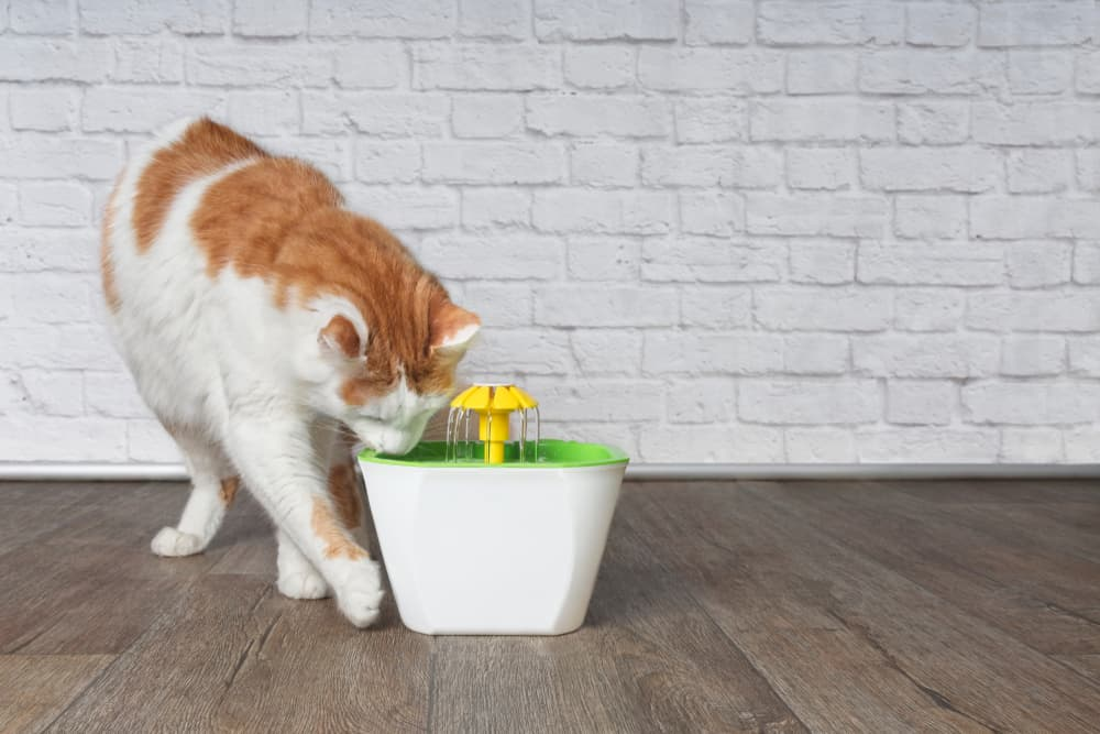 Cat at pet water fountain