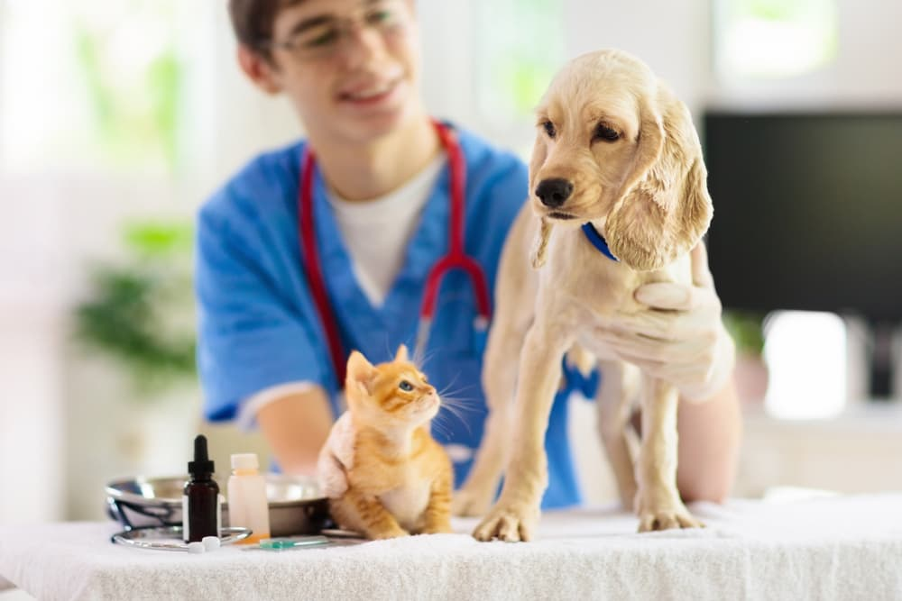 Dog and cat at the vet